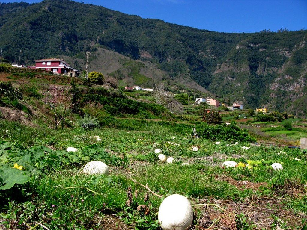 Zona de cultivos en Palo Blanco